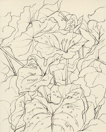 植物をペンでスケッチ_f0189164_21572436.jpg