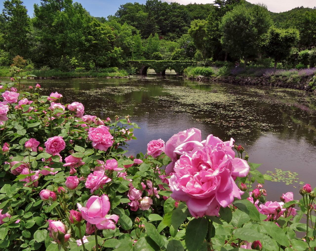軽井沢レイクガーデン:イングリッシュローズガーデンから_c0305565_17314991.jpg