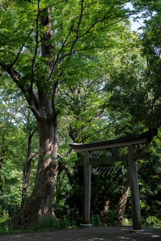 日吉神社_a0261169_21044920.jpg