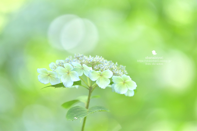 love letter_c0319774_18270558.jpg