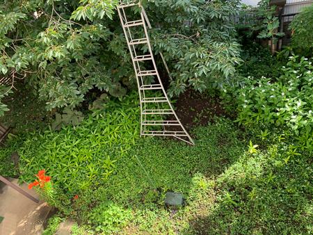 6月の庭  2020 - 3_f0239100_23554230.jpg