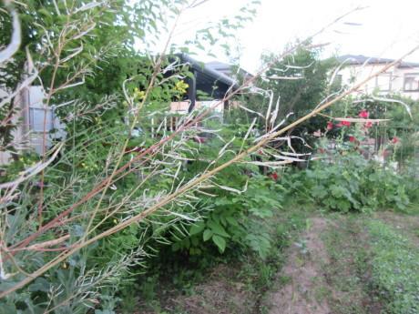 木の実・草の実・アガパンサス蕾など_a0203003_19151392.jpg
