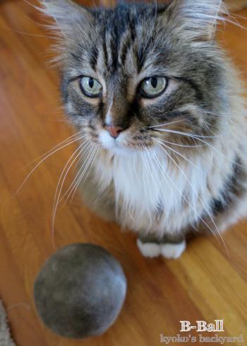 本猫と比べると小さく見える_b0253205_06154296.jpg