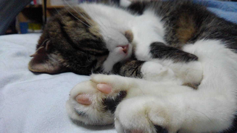 【猫】お休み〜_f0141609_19221877.jpg