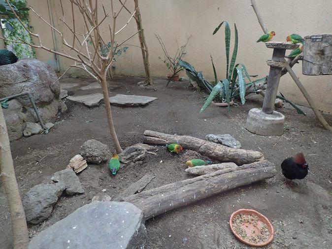 上野動物園バードハウス大図鑑⑧~2F:ミノバトとカンムリシャコ_b0355317_21240017.jpg