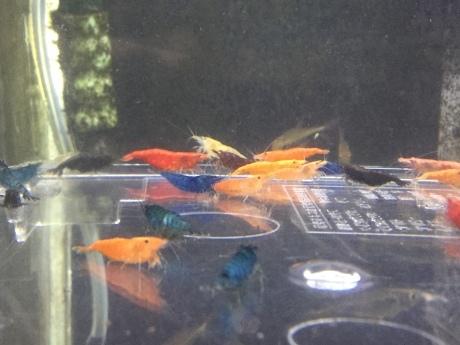 200618  熱帯魚 めだか 金魚 水草_f0189122_12432769.jpeg