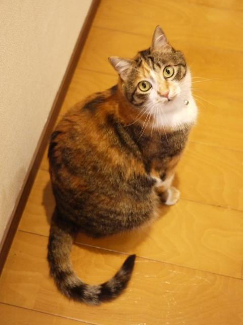 猫のお留守番 ゆめくん編。_a0143140_21463715.jpg