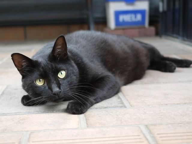 猫のお留守番 風太くん編。_a0143140_21563644.jpg