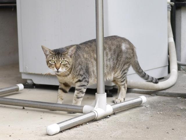 猫のお留守番 霧くん編。_a0143140_21592170.jpg