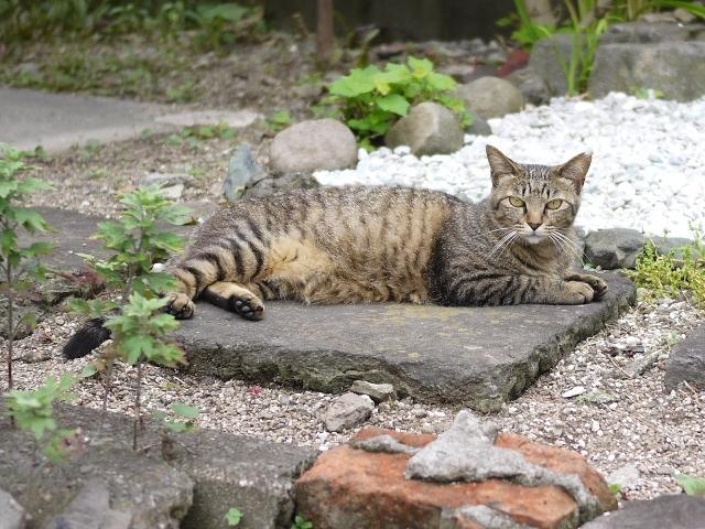猫のお留守番 霞ちゃん編。_a0143140_22051382.jpg