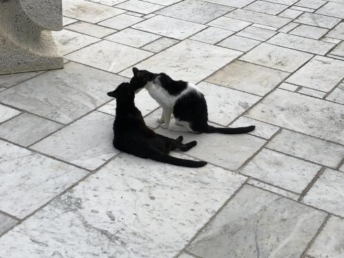 彫刻と猫_d0136540_15463122.jpeg