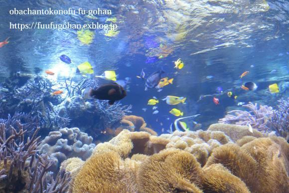 久々お出かけ~水族館。御飯は、おうちで食べました(o^^o)_c0326245_11480471.jpg
