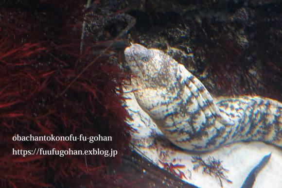 久々お出かけ~水族館。御飯は、おうちで食べました(o^^o)_c0326245_11482888.jpg
