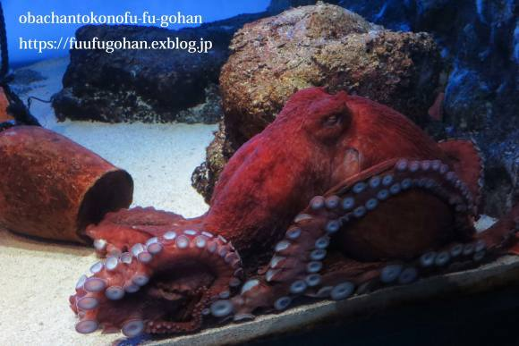 久々お出かけ~水族館。御飯は、おうちで食べました(o^^o)_c0326245_11484782.jpg