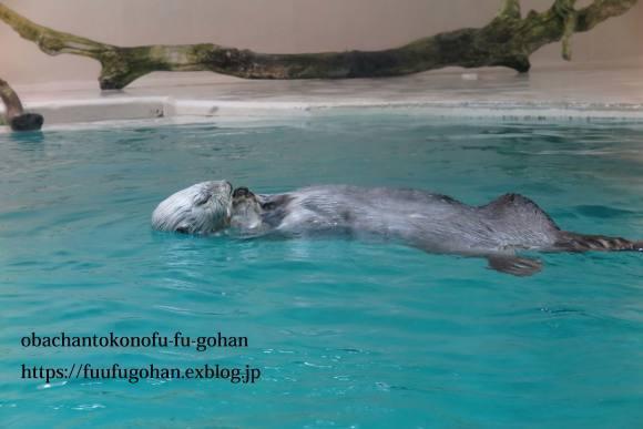 久々お出かけ~水族館。御飯は、おうちで食べました(o^^o)_c0326245_11495722.jpg