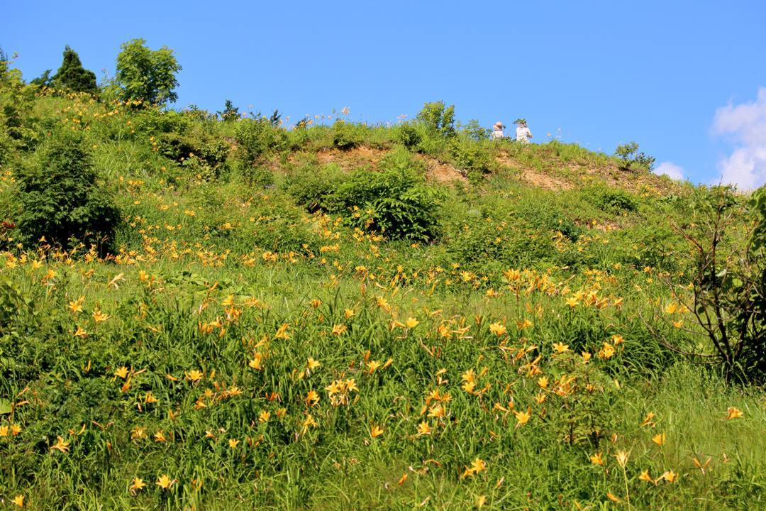 白山高山植物園・前編_e0403850_21544797.jpg