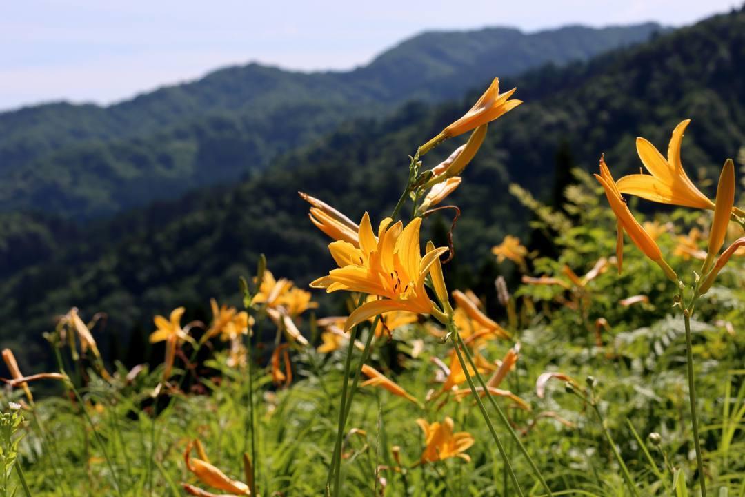 白山高山植物園・前編_e0403850_21545755.jpg