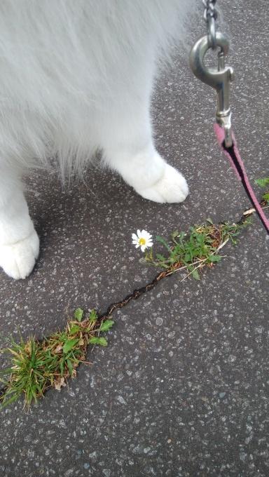 ヤブデマリの花。_c0209379_17584112.jpg