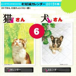 《 6月の猫さん 》_c0328479_15495742.jpg