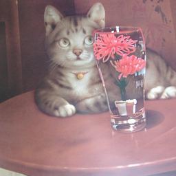 《 6月の猫さん 》_c0328479_16432366.jpg