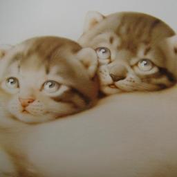 《 6月の猫さん 》_c0328479_16434783.jpg