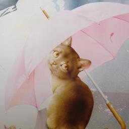 《 6月の猫さん 》_c0328479_16435949.jpg