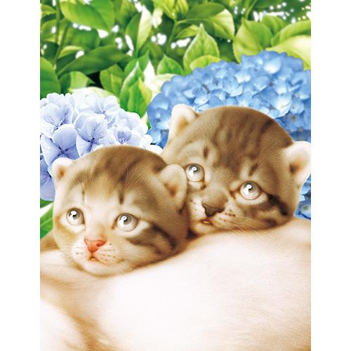 《 6月の猫さん 》_c0328479_16442719.jpg