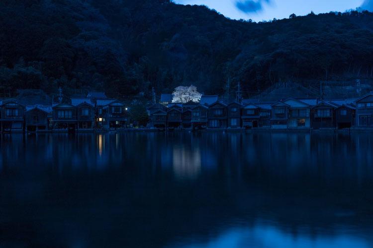 舟屋の里に咲く桜_e0051888_23302085.jpg