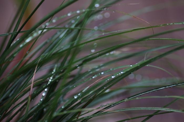 Singing in the rain (2)_c0037200_10032450.jpg