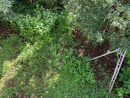 6月の庭  2020 - 3_f0239100_00014953.jpg