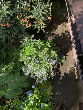 6月の庭  2020 - 3_f0239100_00082453.jpg
