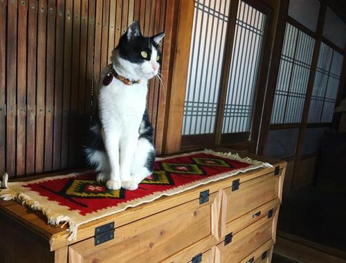 うちの招き猫と新しい下駄箱。_d0077603_18113571.jpg