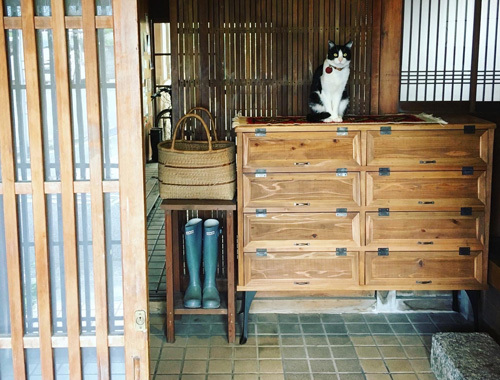 うちの招き猫と新しい下駄箱。_d0077603_18130050.jpg