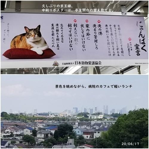 梅雨の中休み_c0051105_06383349.jpg
