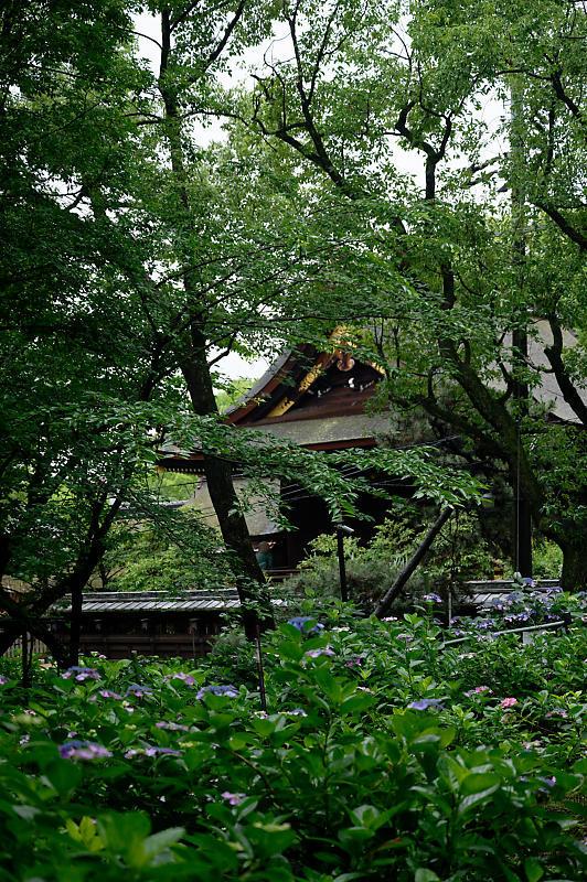紫陽花@藤森神社_f0032011_18452966.jpg
