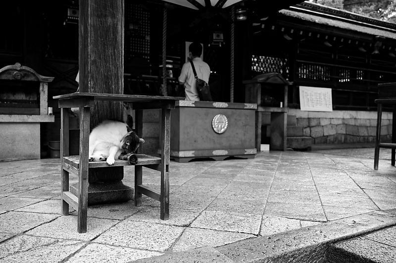 紫陽花@藤森神社_f0032011_19180026.jpg