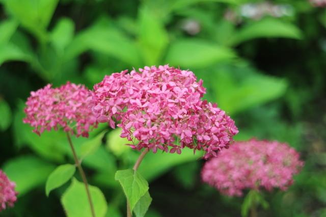 夏の花が咲いて来ました~♪_e0397815_23534752.jpg