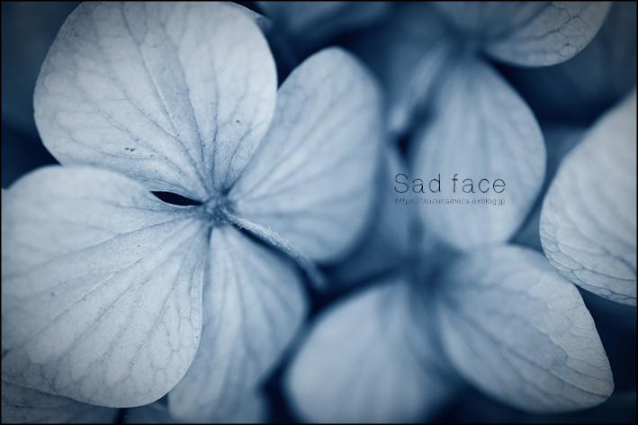 Sad face_f0100215_18474914.jpg