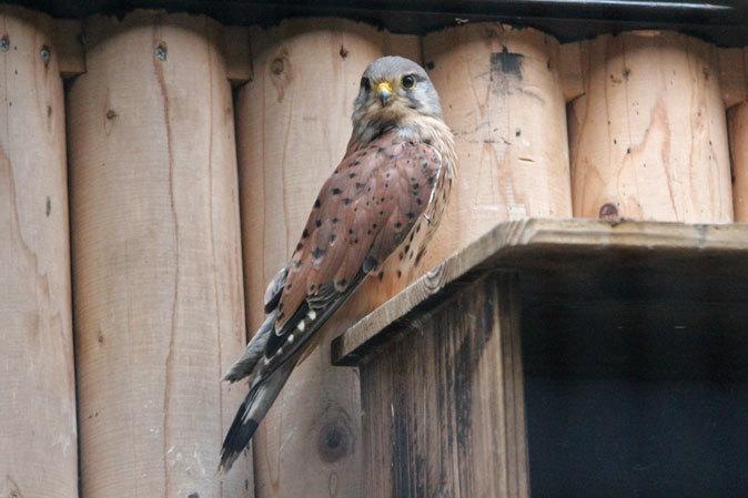 オオコノハズクの若鳥と和鳥舎の鳥たち(井の頭自然文化園 July 2019)_b0355317_21331356.jpg