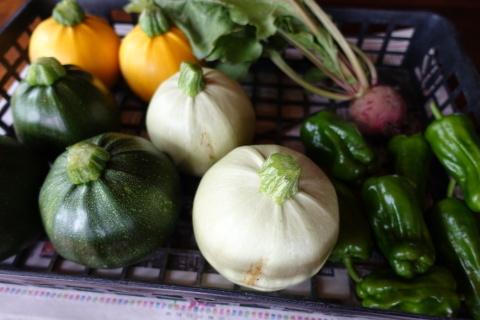 シェフの農園から初収穫_f0013323_18330192.jpg