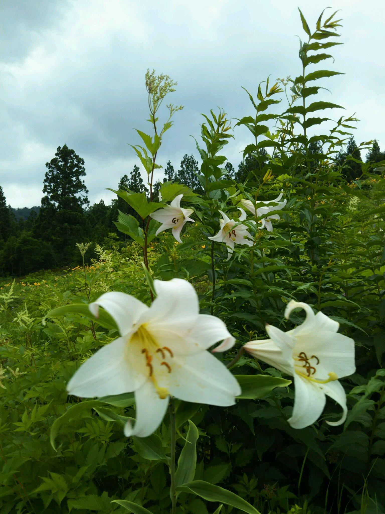 白山高山植物園_f0040734_21303620.jpg
