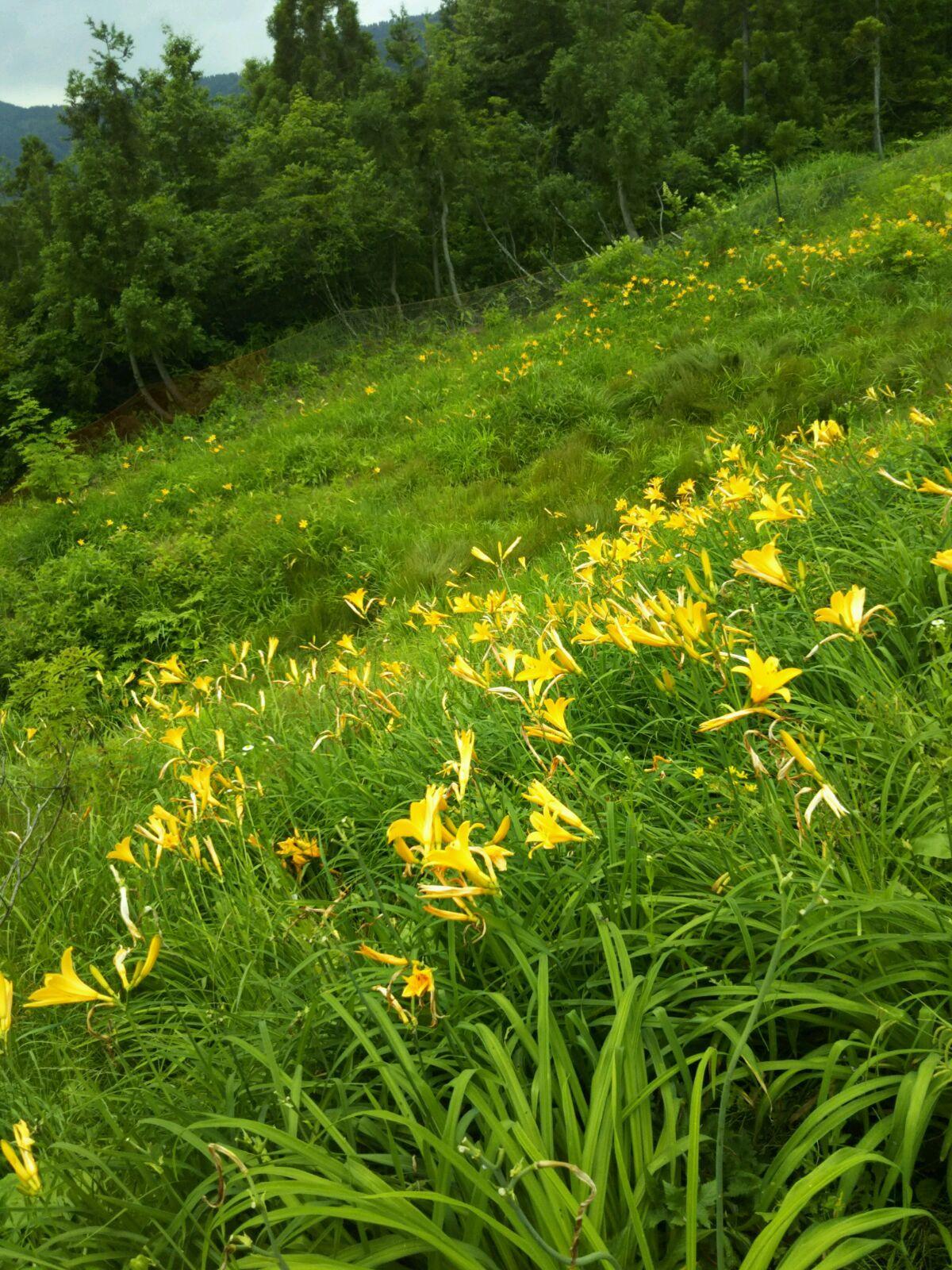 白山高山植物園_f0040734_21303642.jpg