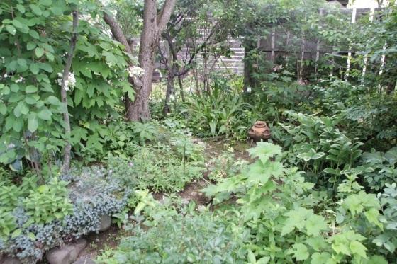 梅雨らしい庭_b0132338_08244023.jpeg