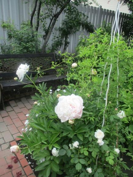 薔薇が少しづつ咲きだした~(^^♪_a0279743_10115279.jpg