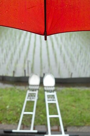 梅雨・・・紫陽花とカエルは、雨が似合う!_d0005250_17301091.jpg