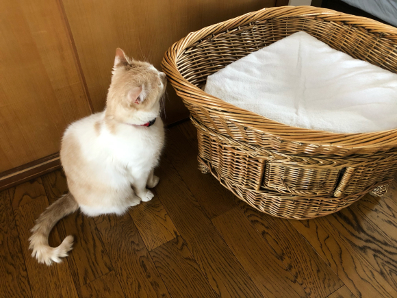 猫様のご機嫌:猫ベッドの場合_d0085254_23325527.jpg