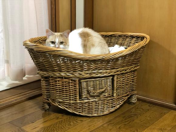 猫様のご機嫌:猫ベッドの場合_d0085254_23331779.jpg