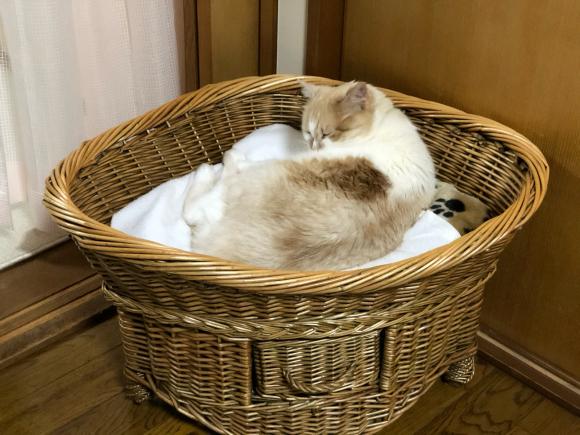 猫様のご機嫌:猫ベッドの場合_d0085254_23332603.jpg