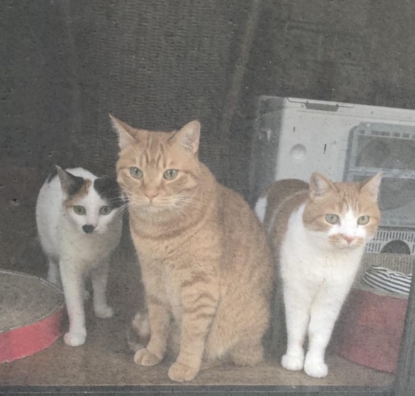 3cats_e0153460_10504886.jpg