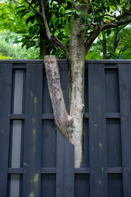 塀に沿って歩く_a0261169_19053002.jpg